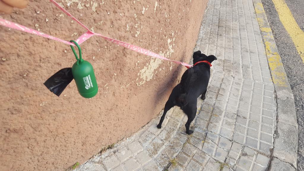 Excrementos de perros en Capdepera