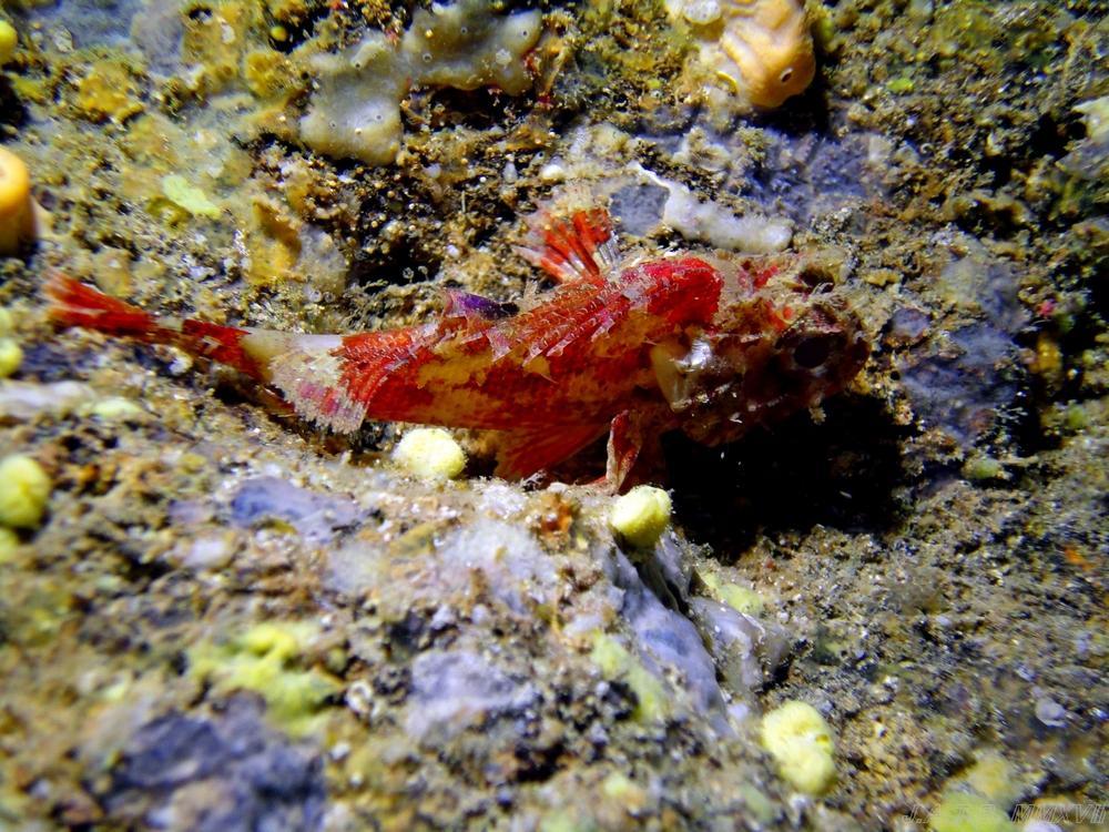 suciedad del fondo marino de algunas zonas de Mallorca.