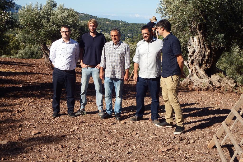 VALLDEMOSSA- Inici de la campanya de la DO Oliva de Mallorca a la finca de Son Moragues