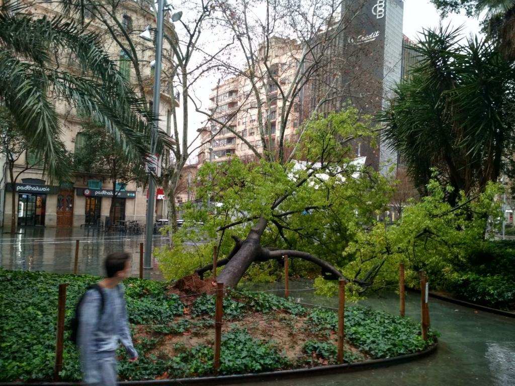 Cae un arbol en la plaza de España