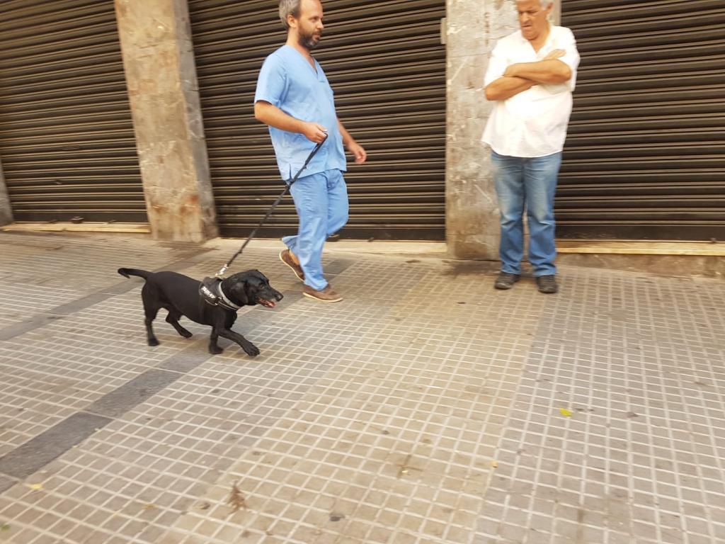 Ataque de un pitbull en Palma