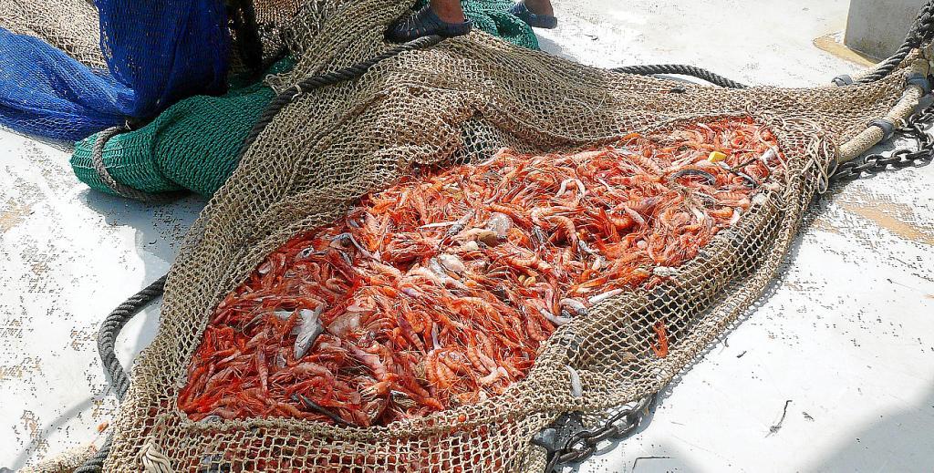 Resultado de imagen para pesca de gambas