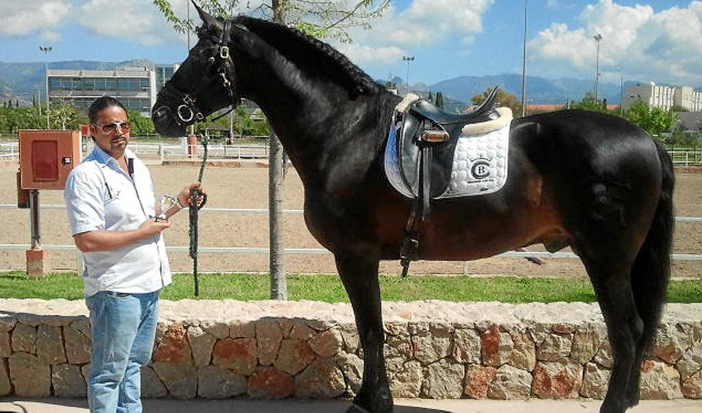 La Guardia Civil se incauta de 16 caballos purasangre del clan de ...