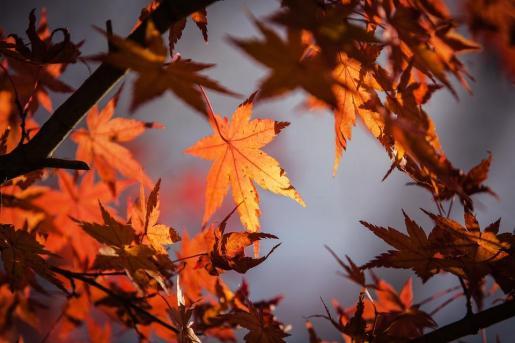 La Aemet ha anunciado este jueves la previsión del tiempo para este otoño en Mallorca.