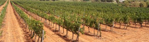 Vinos de Mallorca