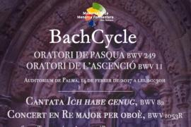 Bach Cycle